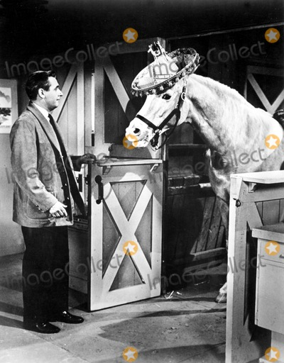 Alan Young Photo - Alan Young in a Scene From Mister Ed Supplied by RangefindersGlobe Photos Inc Movie Stills