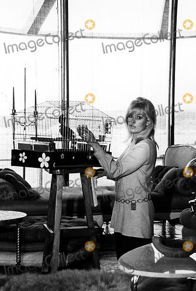 Kim Novak Photo - Kim Novak Ny1347 Globe Photos Inc Kimnovakretro