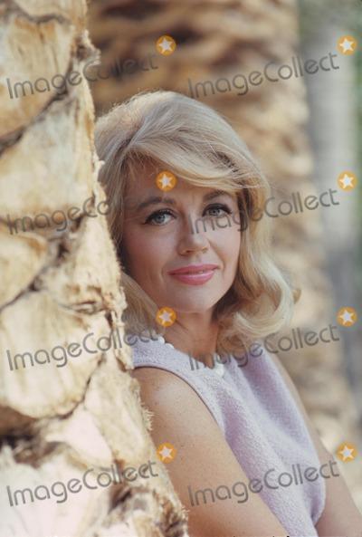 Dorothy Malone Photo - Dorothy Malone 1967 V6688s Photo by Don Ornitz-Globe Photos Inc