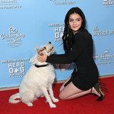 Photo - 9th Annual American Humane Hero Dog Awards